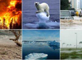 Κλιματική αλλαγή: Τα ζώα αλλάζουν σχήμα για να αντέξουν στις ακραίες θερμοκρασίες